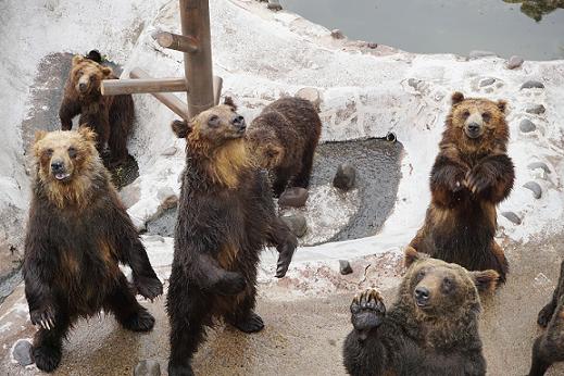 クマ牧場の熊たち