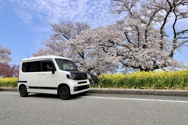 バンと桜の木と菜の花