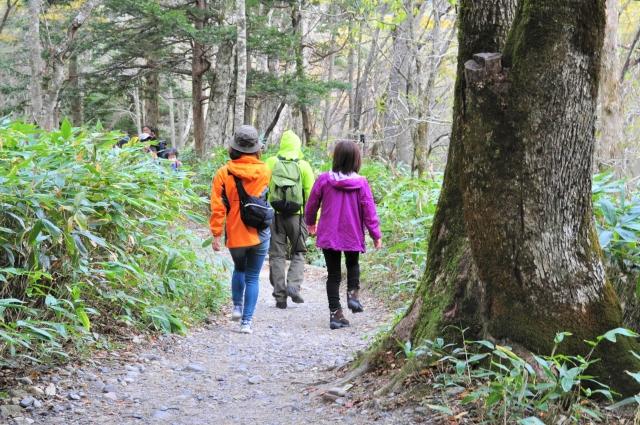 森をハイキングする3人